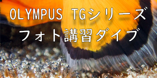 この画像には alt 属性が指定されておらず、ファイル名は TGpop.jpg です